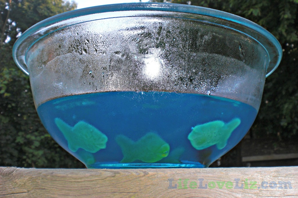 Jell-O Fish Bowl