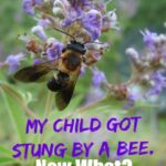 Your Child  Just Got Stung by a Bee. Do you know what to do next?  Read on for all the information you need to know to be prepared this summer!